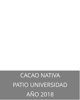 CACAO NATIVA PATIO UNIVERSIDAD AÑO 2018